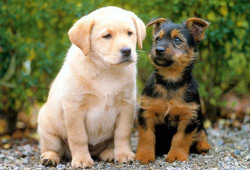 Most Popular Best Pets In The World - Dogs