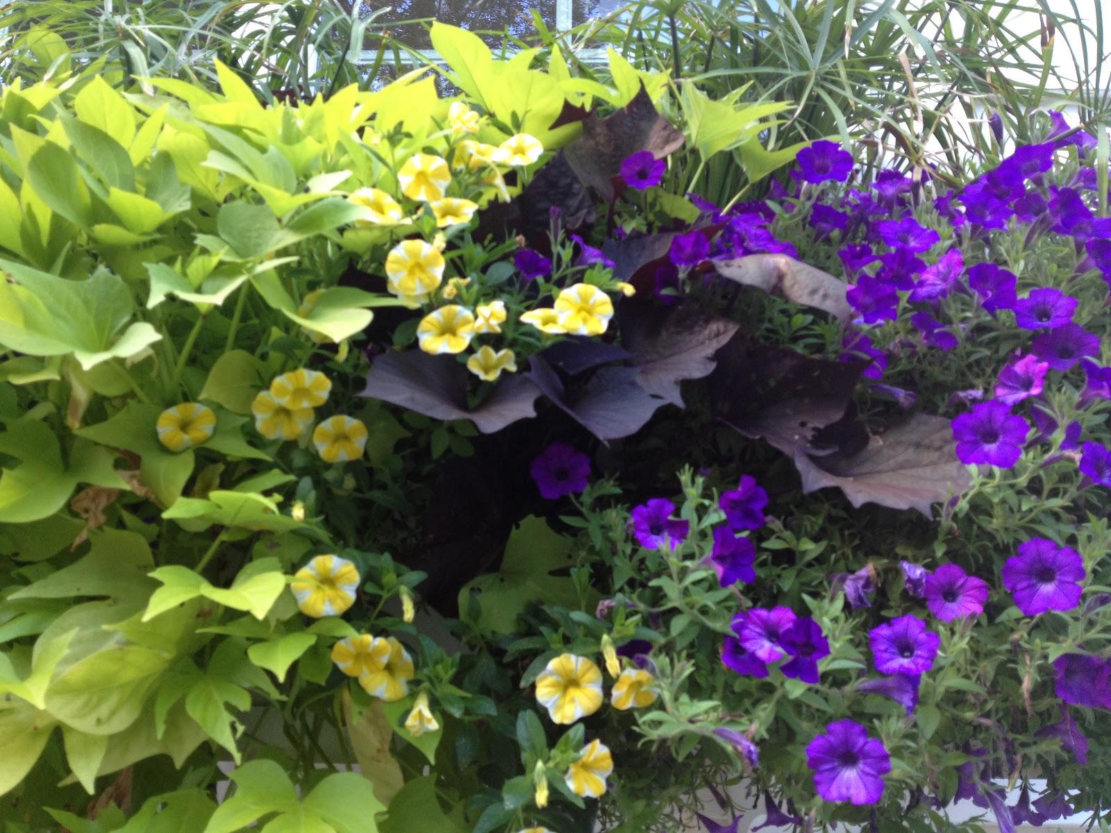 The Impatient Gardener Window box success