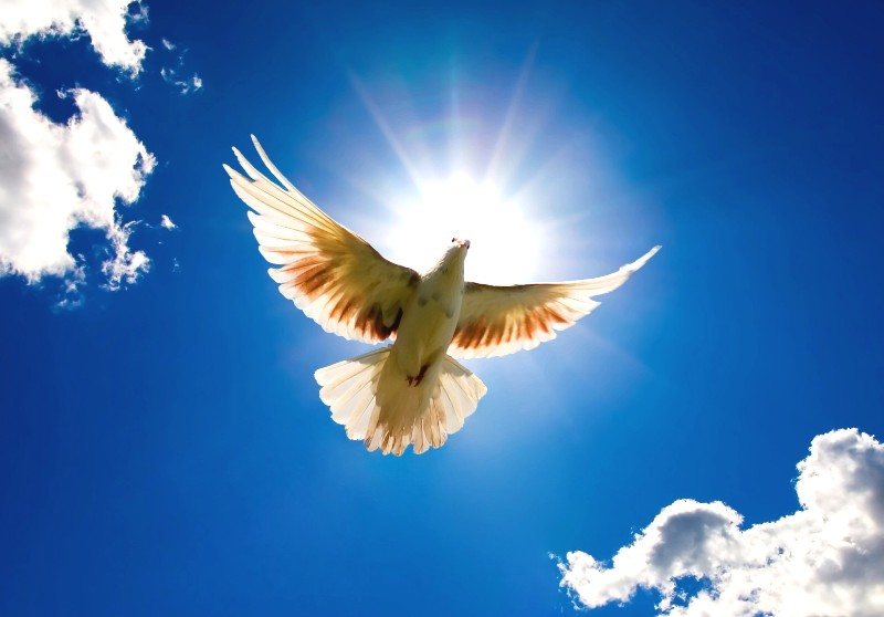 http://3.bp.blogspot.com/-_our_SWOjhI/UDADaX1cU9I/AAAAAAAAApM/JoamH_j_E6c/s1600/Dove-Bird-from-Sky-Wallpaper.jpg