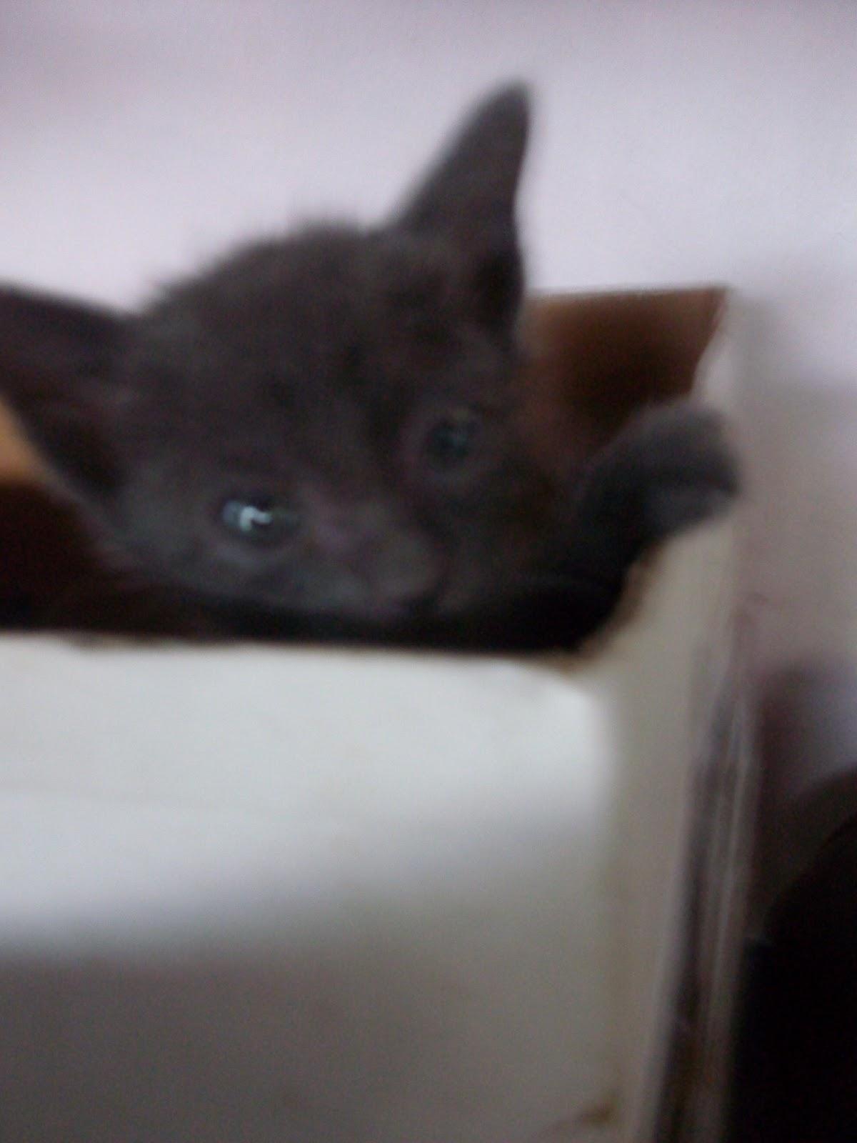Selamatkan Kucing Jalanan Tips Penjagaan Anak Kucing