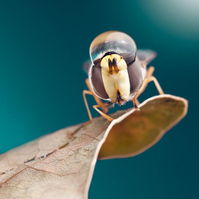 Εντυπωσιακές macro φωτογραφίες εντόμων