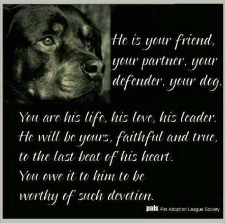 Drunk Quotes Funny Animal Quotesgram: Best Rottweiler Quotes