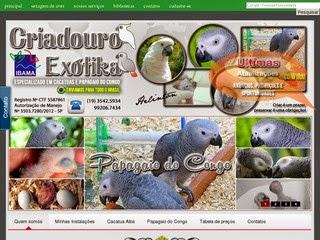 Criadouro Especializado em Papagaio do Congo e Cacatua Alba