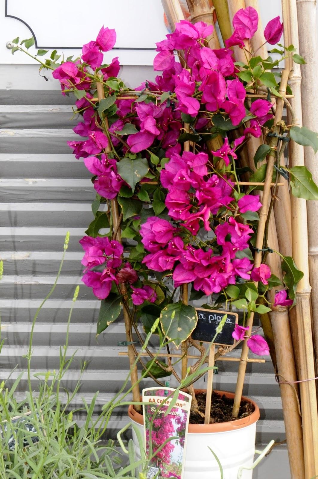 arum nature fleuriste ol ron plantes int rieur et