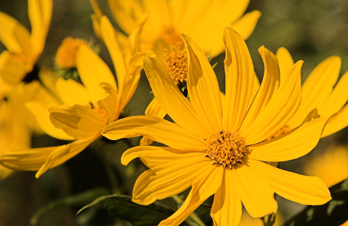 yellow flower pictures - photo #34