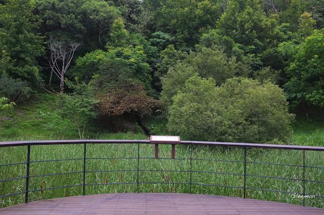 生態池附近常可看到黃襟蛺蝶與琉璃蛺蝶穿梭於水柳間。