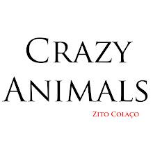 Blog Crazy Animals