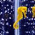 Cauda dos cavalos-marinhos pode ajudar em estudos de robótica
