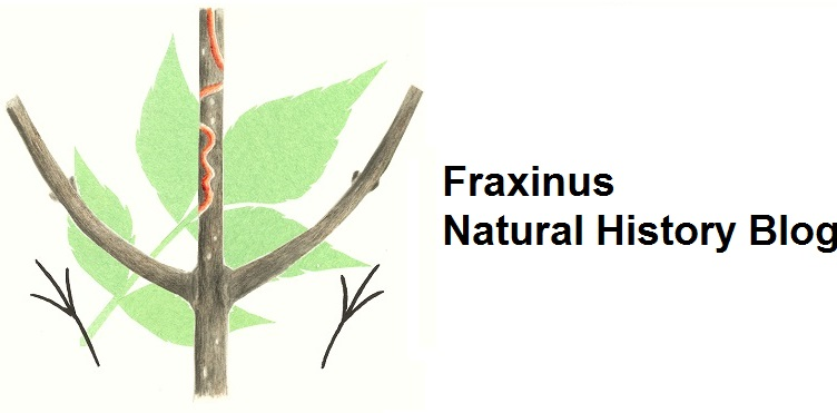 Fraxinus Natural History Blog