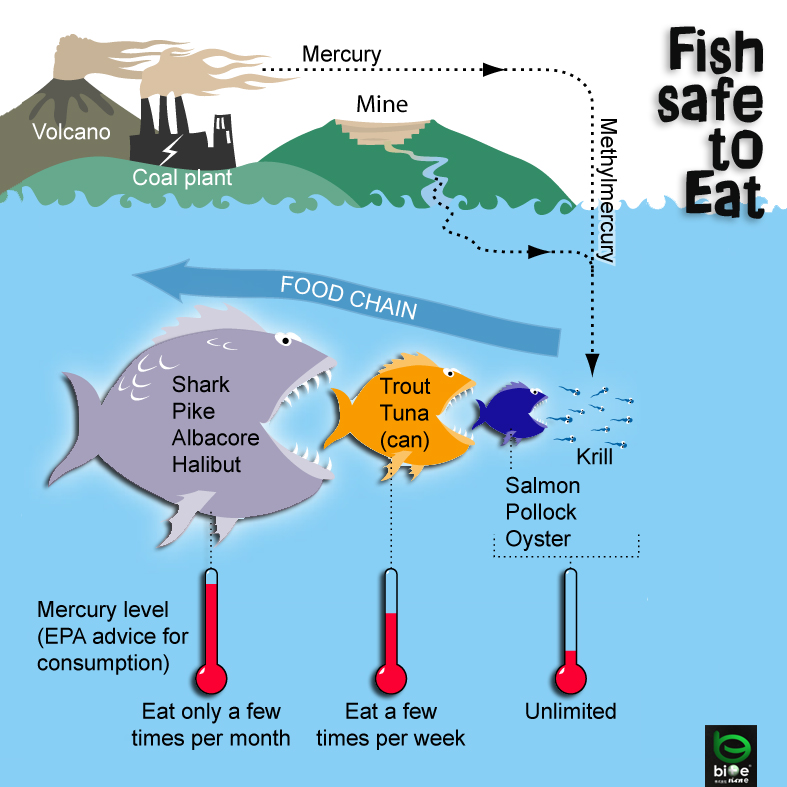 Mercury levels in our fish for Mercury in fish