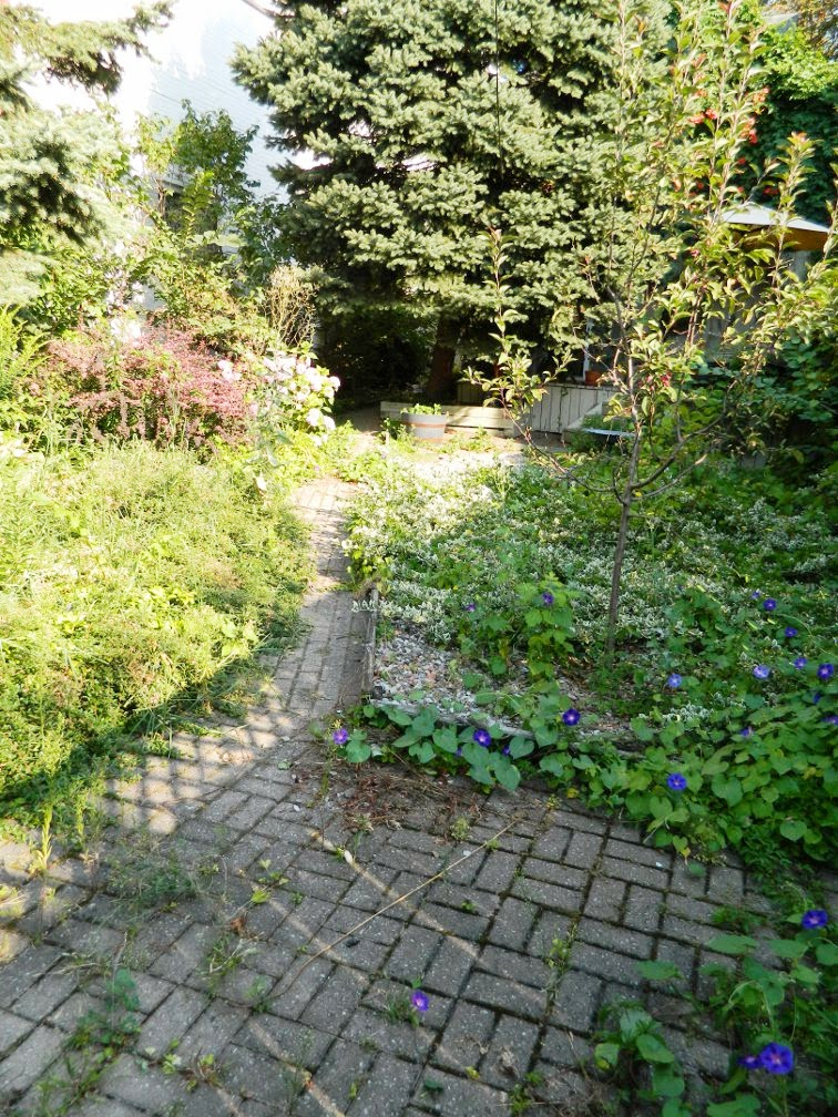Toronto garden cleanup Cabbagetown backyard path before Paul Jung Gardening Services