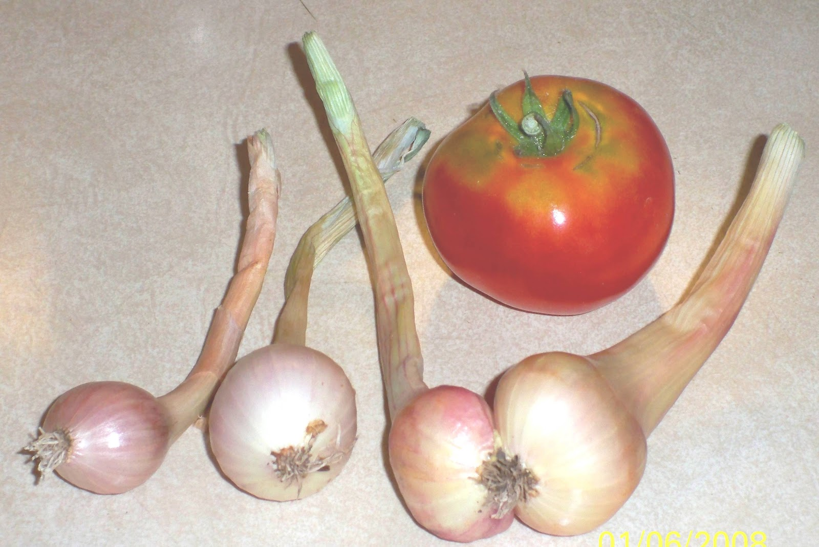 The shallots have begun to mature. What would my harvests be without lettuce ...