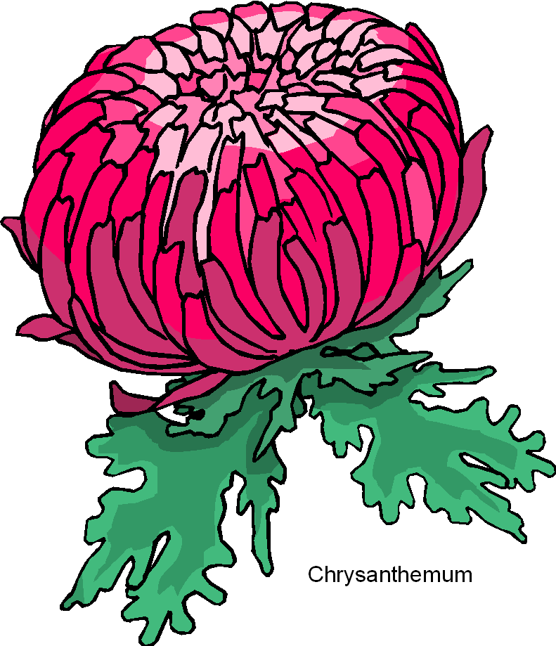 Chrysanthemum Flower Free Clipart