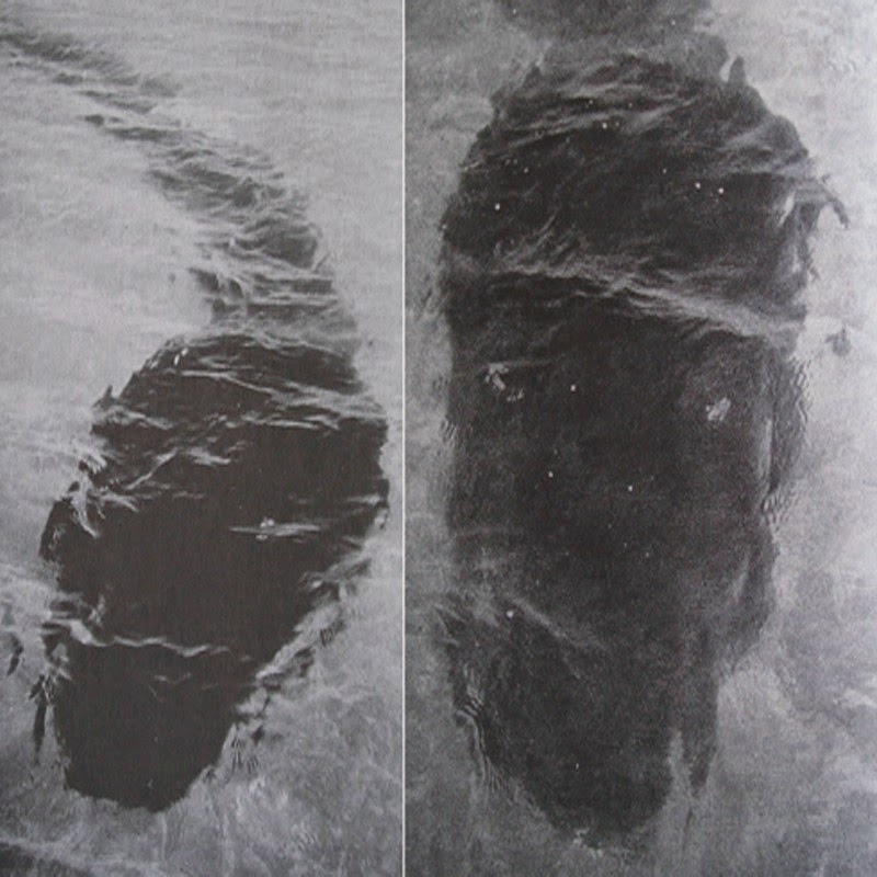 The Mystery Of The Hook Island Sea Monster