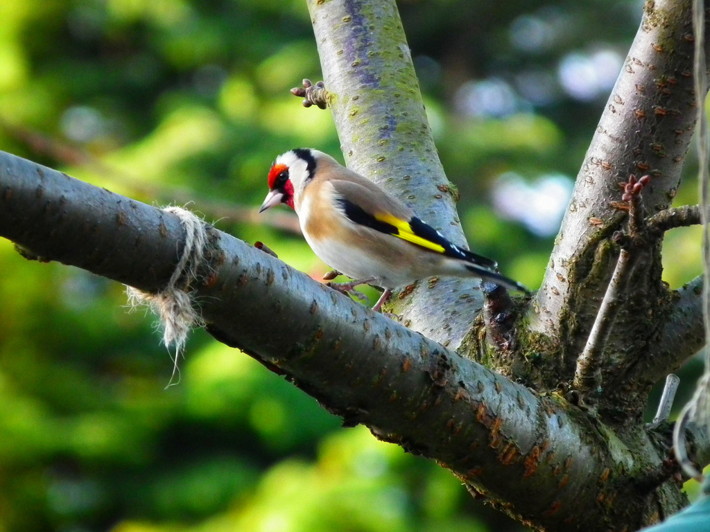 The World Smallest Bird in Nest