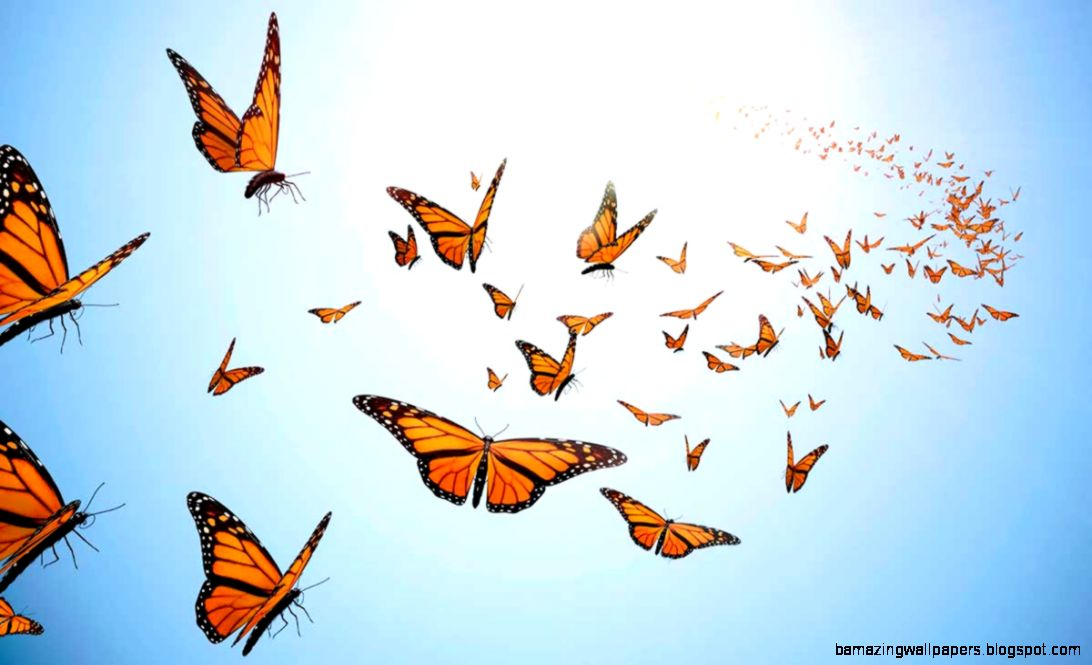 The Effortless Way to Get Your Anxiety Butterflies Flying in Formation