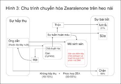 Chi trình chuyển hóa ZEA trên heo nái