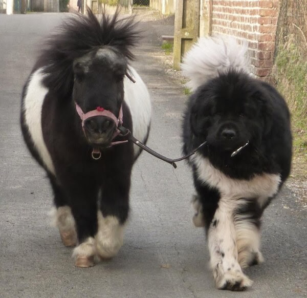 Funny animals of the week - 15 November 2013 (35 pics), animal pic, funny animal, cute animal
