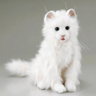 Memelihara Kucing Aggora