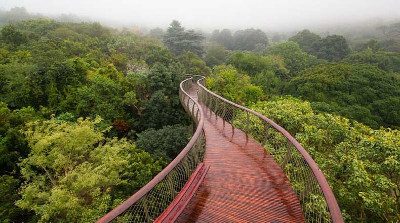 El Boomslang: Un puente colgante en Ciudad del Cabo que te permite caminar sobre los árboles