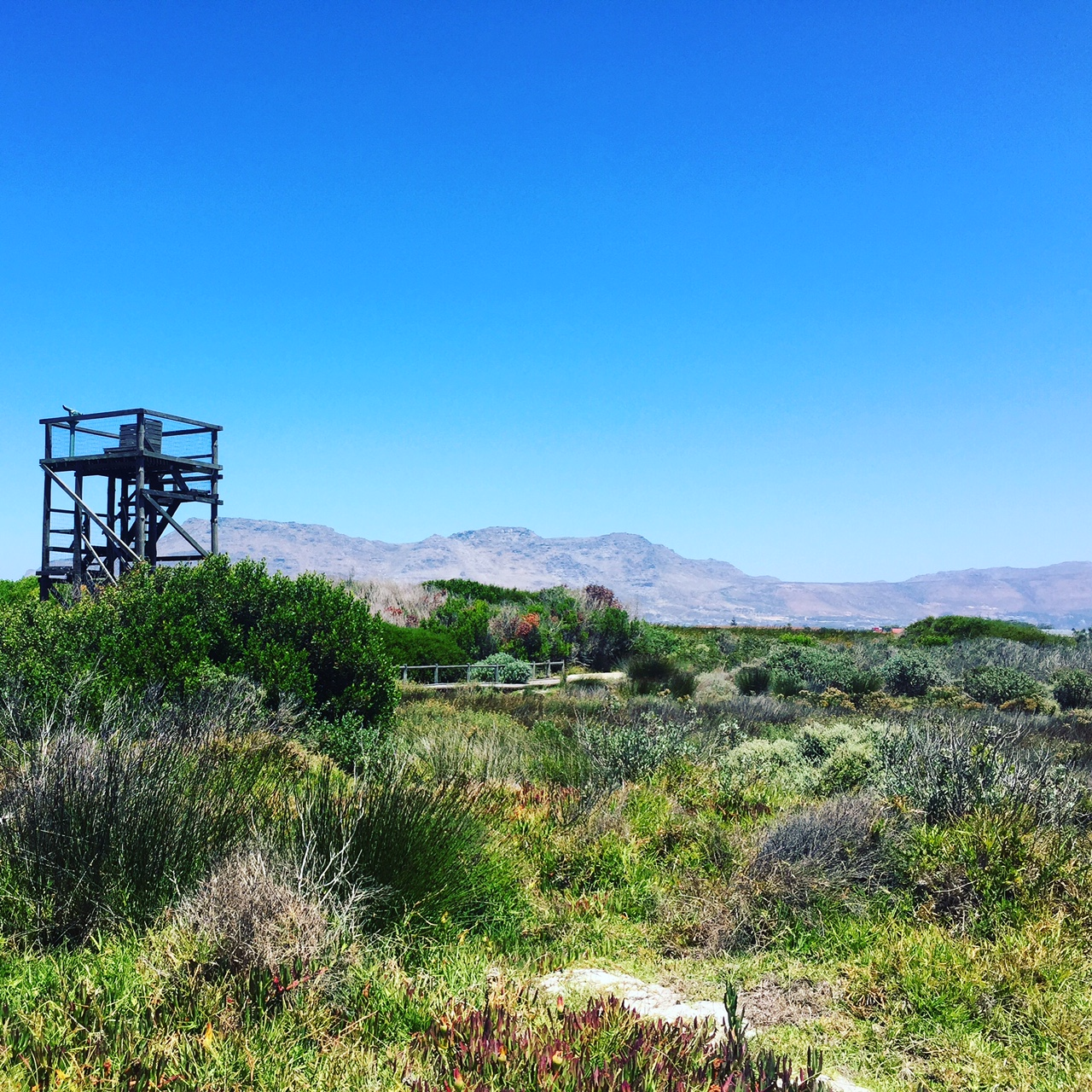Les jujutr pides d couvrent la rondevlei nature reserve for A porter du regard synonyme
