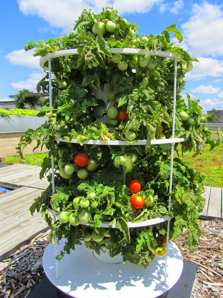InHouse vegetable garden aeroponics and a very special
