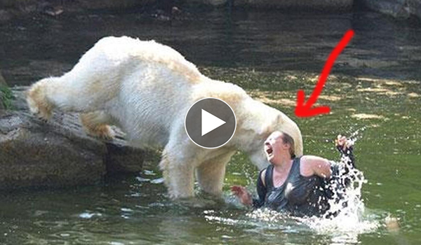Worst Animal Het 24 News
