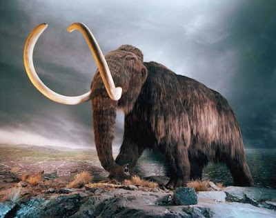 Mammoth ( Mammuthus Primigenius)