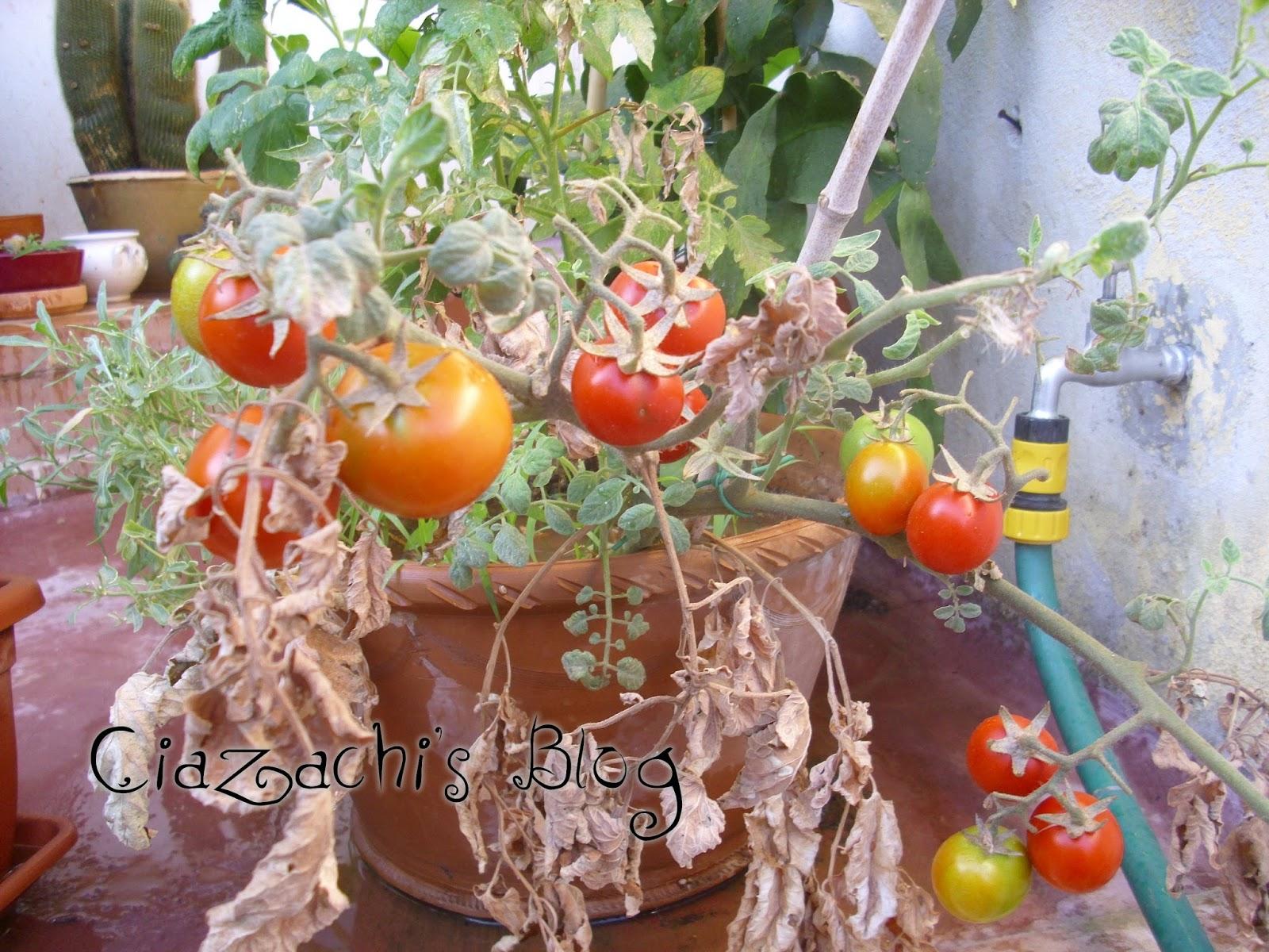 Con le mani di ciazachi il blog il mio orto di for Basilico in vaso