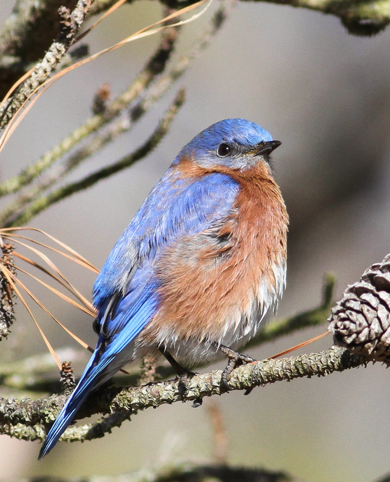 common birds in virginia choice image