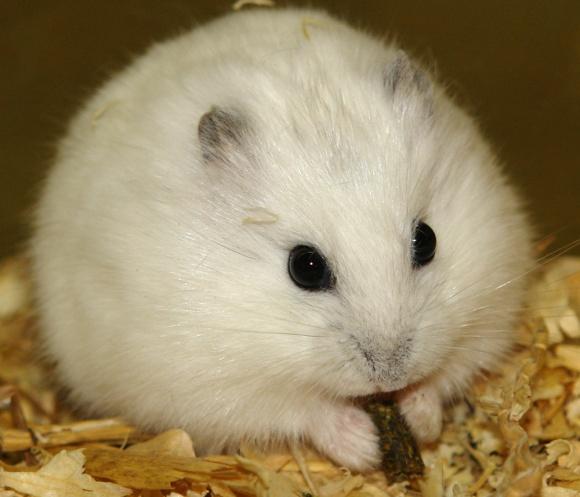 Funny-Hamster-1.jpg