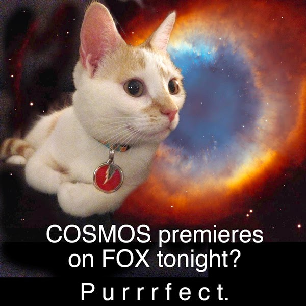 Chloe cat Cosmos Helix Nebula space FOX Purrrfect Josef Spalenka