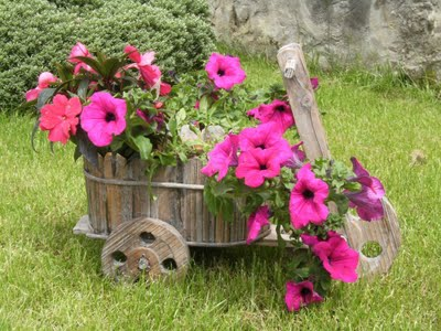 Somente flores petunia for Petunie inverno