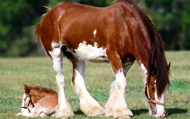 horses+pictures+%25285%2529