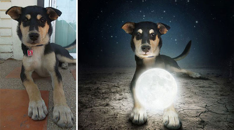 Artista sigue creando preciosas fotos surrealistas de perros de refugios para ayudarles a encontrar un hogar