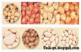 Kacang-kacangan http://unik-qu.blogspot.com/