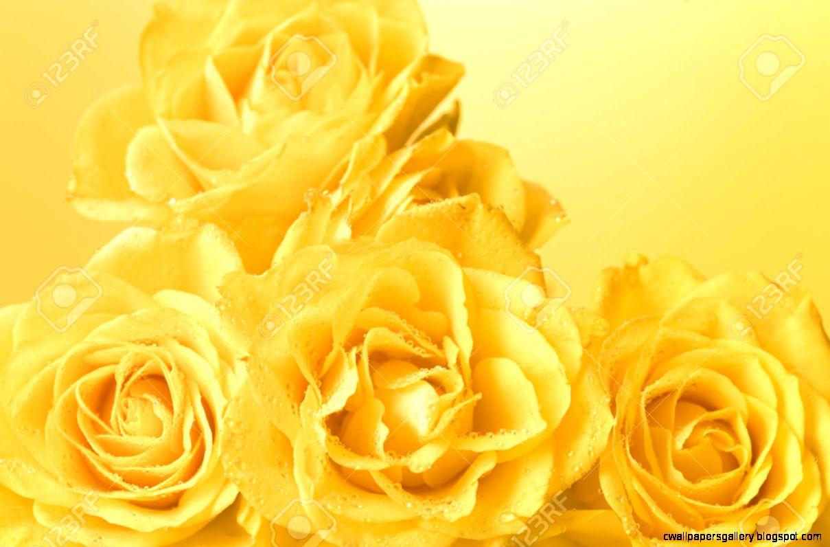 Bunch Of Pastel Yellow Roses With Droplets Light Yellow