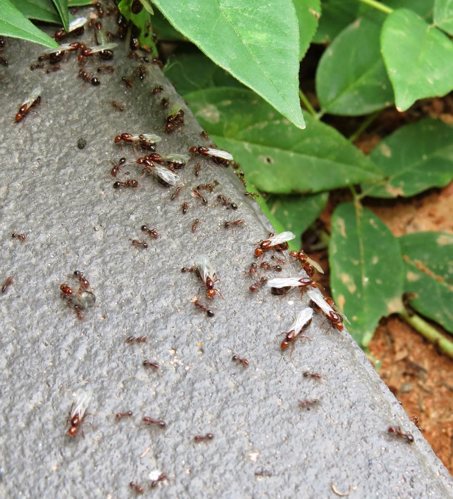Flying Ants Under Carpet Carpet Vidalondon