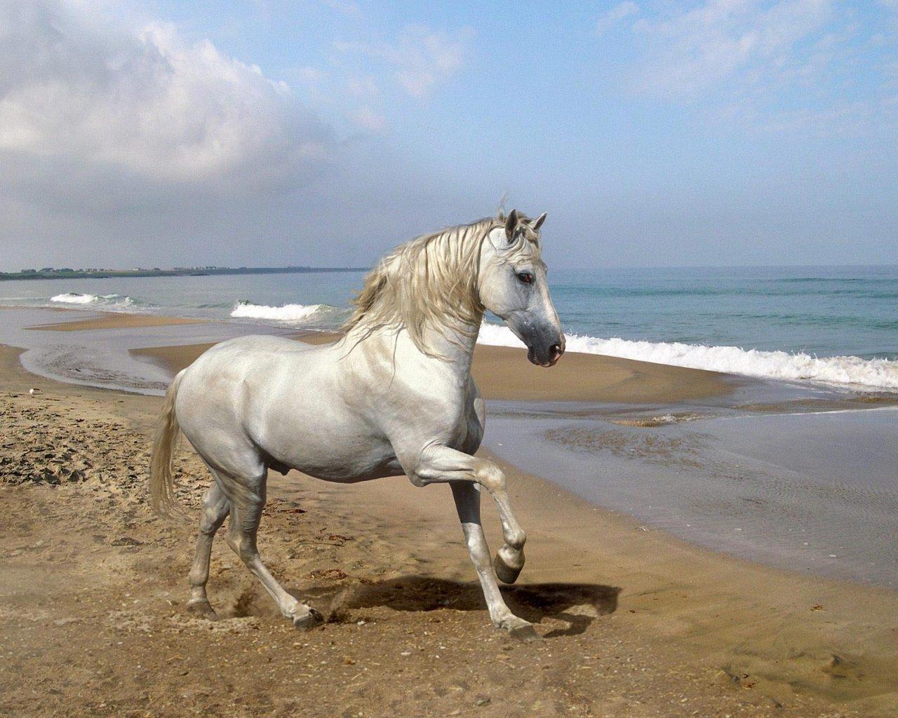 coleccion de imagenes de caballos donde los principales protagonistas ...