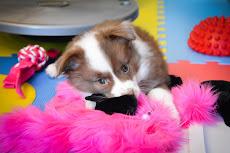 More fluffy!!