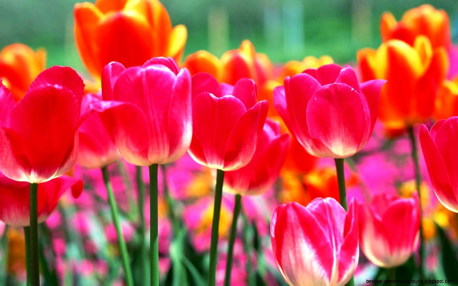 Beautiful spring flowers best wallpaper background view original size izmirmasajfo