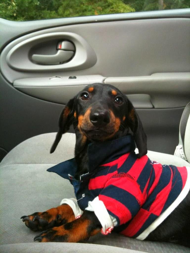 Cute dogs - part 11 (50 pics), dog car ride wearing shirt