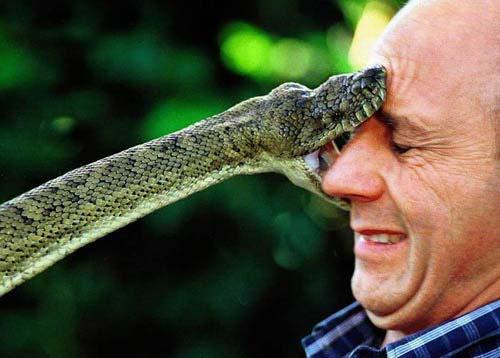 python snake bite