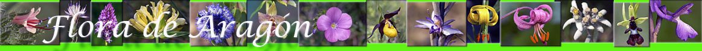 flora-aragon/etimologia