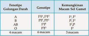 Tabel Hubungan Fenotipe dan Genotipe Golongan Darah ABO