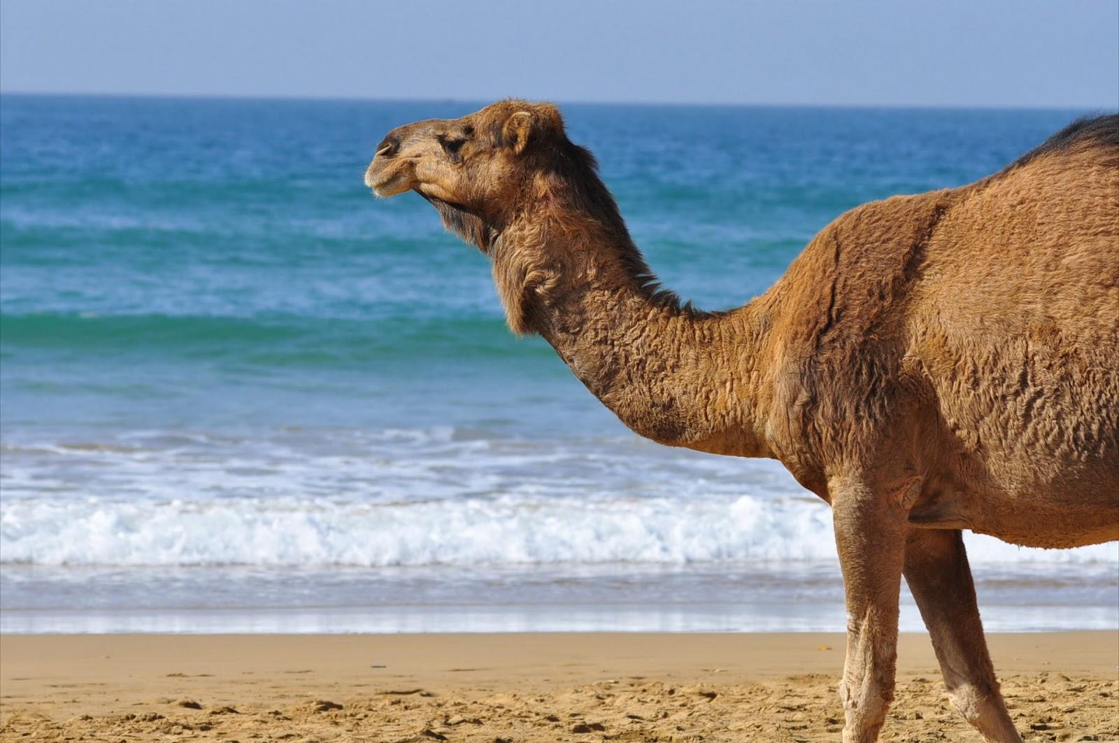 Сматреть порно бесплатно с верблюдами