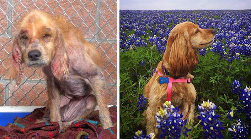 Kenzi - 16 Before-and-After Photos Of Rescued Dogs