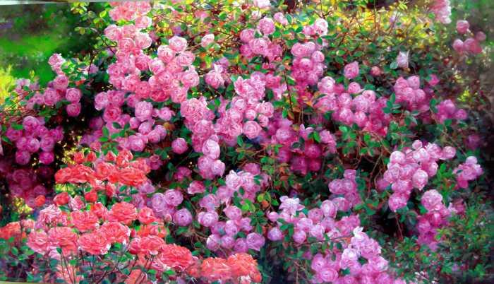 Romantic Flowers: Rose Garden