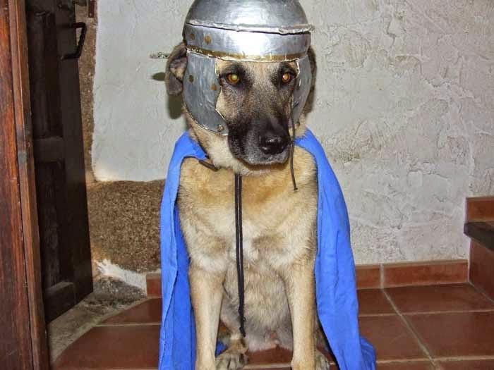 Laika, chienne fidèle