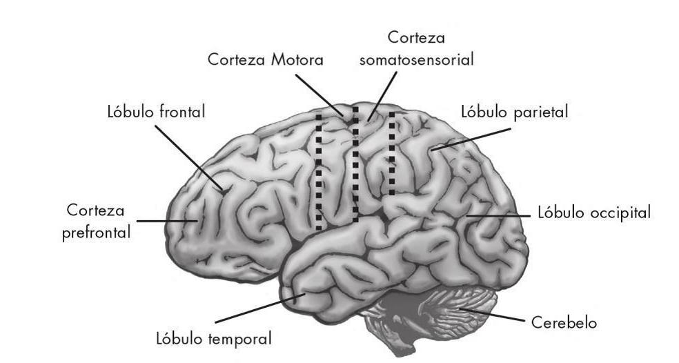 Neurociencia Educativa: Los secretos de la creatividad ...